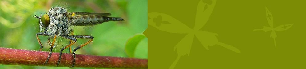 bureau d etude environnemental ain bureau etude environnemental ain ecotope faune et flore